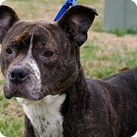 Adopt A Pet :: Rita - Erwin, TN
