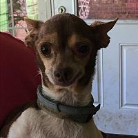 Adopt A Pet :: Tanza - Blanchard, OK
