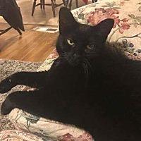 Adopt A Pet :: Vivi - Freehold, NJ