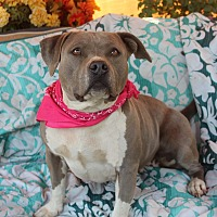 Adopt A Pet :: Isabella - Toluca Lake, CA