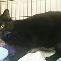 Adopt A Pet :: Dalihia - Ashtabula, OH