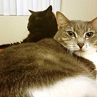 Adopt A Pet :: Dexter & Hannah - Riverside, CA