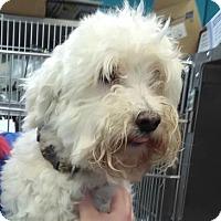 Adopt A Pet :: KENDAL - Lakeland, FL