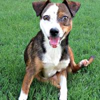 Adopt A Pet :: Frasier - McKinney, TX