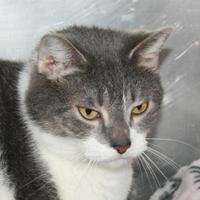 Adopt A Pet :: SASSY - Newport News, VA