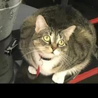 Adopt A Pet :: Mia - Norfolk, VA