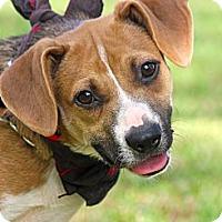 Adopt A Pet :: Whitman - Albany, NY