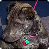 Adopt A Pet :: Fuzzy Ears - Bakersfield, CA