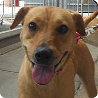 Adopt A Pet :: Tilly - Phoenix, AZ