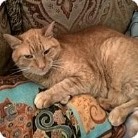 Adopt A Pet :: Casey - Jackson, NJ