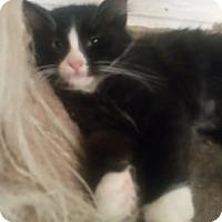 Adopt A Pet :: GloriaT - North Highlands, CA