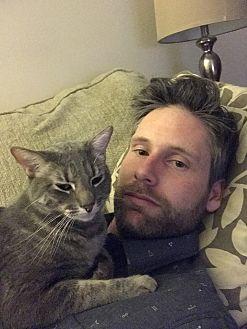 Domestic Shorthair Cat for adoption in Encino, California - Leo