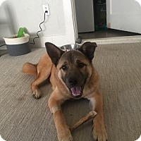 Adopt A Pet :: Skye - oklahoma city, OK