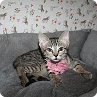 Adopt A Pet :: Leia - Spring, TX