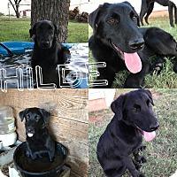 Adopt A Pet :: Hilde - Snyder, TX