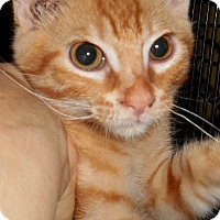 Adopt A Pet :: Alf - Chattanooga, TN