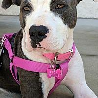 Adopt A Pet :: Haven - Albemarle, NC