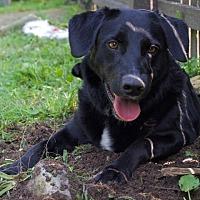 Adopt A Pet :: Justice - Sparta, NJ