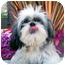 Photo 2 - Lhasa Apso Dog for adoption in Los Angeles, California - CARINA