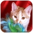 Photo 1 - Domestic Shorthair Cat for adoption in Nashville, Tennessee - Bunny