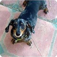 Adopt A Pet :: Mollie - San Jose, CA