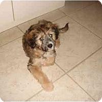 Adopt A Pet :: Sizani - West Palm Beach, FL