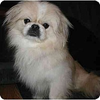 Adopt A Pet :: Smoochy - Mays Landing, NJ