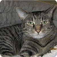 Adopt A Pet :: Helmet - Richfield, OH