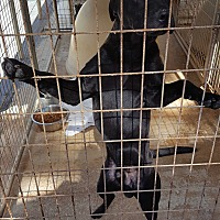 Adopt A Pet :: Grumpy - Marianna, FL