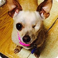 Adopt A Pet :: Mouse - Santa Monica, CA