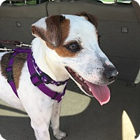 Adopt A Pet :: Jet in Seguin - San Antonio, TX