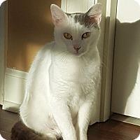 Adopt A Pet :: Rae H - Knoxville, TN