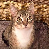 Adopt A Pet :: HAYLEY - Burlington, NC