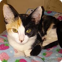 Adopt A Pet :: Scarlett - Winchester, CA