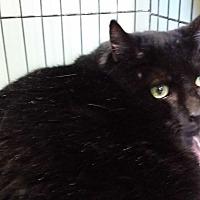 Adopt A Pet :: Elvis - Berlin, CT