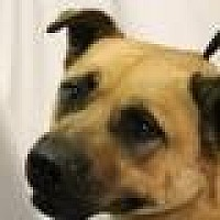 Adopt A Pet :: Yao - Huachuca City, AZ