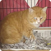 Domestic Shorthair Cat for adoption in Dallas, Georgia - 17-07-2021 Frank