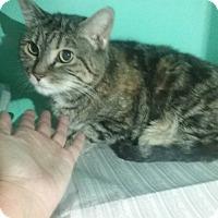 Adopt A Pet :: Tabby Girl - Elizabeth, NJ