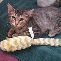 Adopt A Pet :: Spencer - Fort Pierce, FL