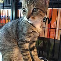 Adopt A Pet :: Christopher and Robin - Fairfax, VA