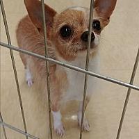 Adopt A Pet :: Chiclet - Ogden, UT