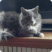 Adopt A Pet :: Thunder - Saint Albans, WV