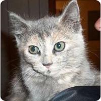 Adopt A Pet :: Anastasia - Acme, PA