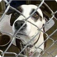 Adopt A Pet :: Piper - Emory, TX