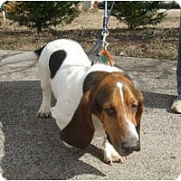 Adopt A Pet :: Jack - Douglasville, GA