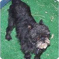 Adopt A Pet :: TAD - in Phoenix, AZ - Los Angeles, CA