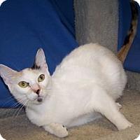Adopt A Pet :: Hannah - Colorado Springs, CO