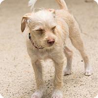 Adopt A Pet :: Anniston - Norwalk, CT