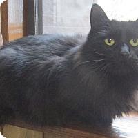 Adopt A Pet :: Blaise - Witter, AR