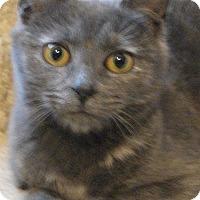 Adopt A Pet :: Molly - Colmar, PA